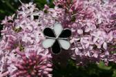 Kytička černo-bílá - Tiffany šperky